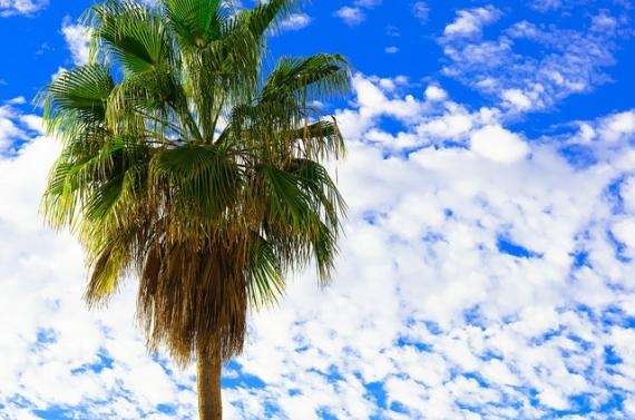 'Palm Tree - Tenerife - Canary Islands - Holiday. By Thomas Tolkien' - Tenerife